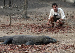 Getting a bit too close to Komodo Dragons on Rica Island in Indonesia